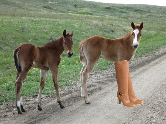 baby paard met laarzen
